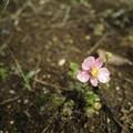 Photos: 雨上がりの花