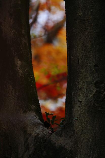 下鴨神社25