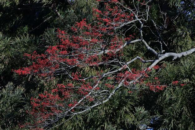 Photos: 湖東のみち15
