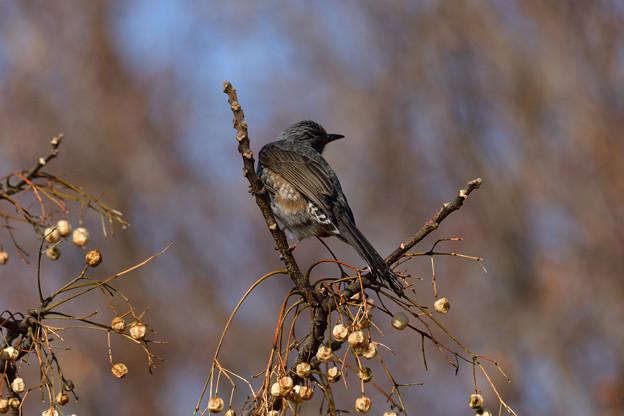 鳥_495