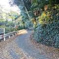 Photos: ひの坂