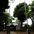 国分寺の名木 シラカシ