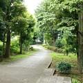 写真: 新田川緑道