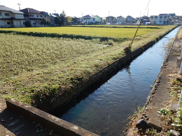 東豊田の田んぼと水路のある風景