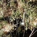 写真: 女滝