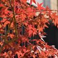 写真: 宇治の紅葉