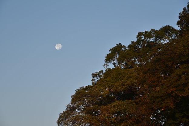 写真: 大阪城 桜門付近から見えた月