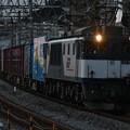 写真: 貨物列車 (EF641013)