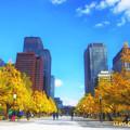 写真: 東京百景 和田倉門の銀杏並木