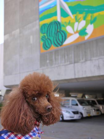 三崎港「うらり」前でお母さんを待っております