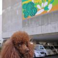 写真: 三崎港「うらり」前でお母さんを待っております