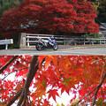Photos: ドンと紅葉