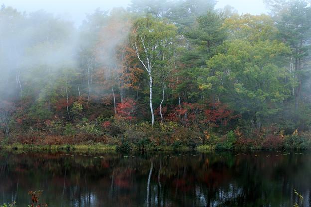 霧のベール