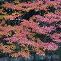 写真: 秋の色は・・・