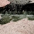 花筏の流れ1