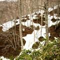 残雪の木々の雪解け風景