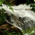 新緑の岩魚の滝4