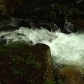 新緑の照葉峡渓流10