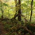 吐竜の滝への山道