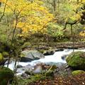 吐竜の滝への秋の渓流