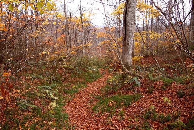 鎌池の周り道の紅葉