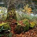 池の道の紅葉