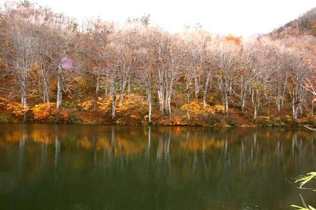 鎌池木々の反映