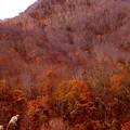 山の晩秋風景