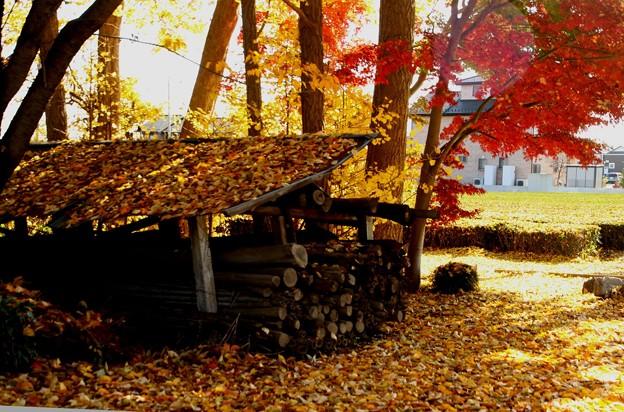 落葉と紅葉