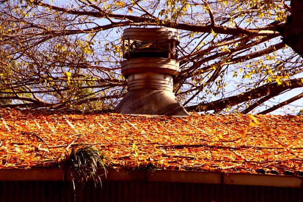 家畜小屋の屋根