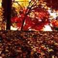 木材小屋の落葉