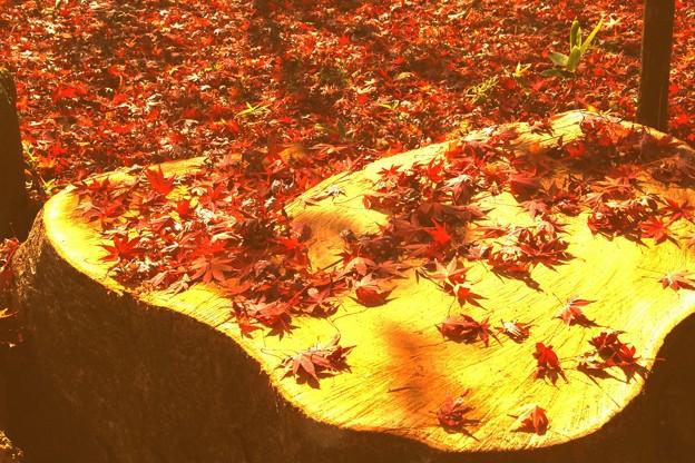 切り株の上の落葉