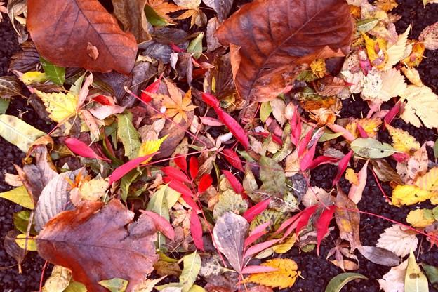 落葉の色彩