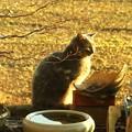 鳥の餌場に猫が出現!