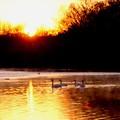 越辺川の日ノ出