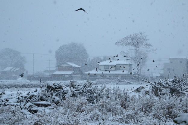 降雪のなかの鳥