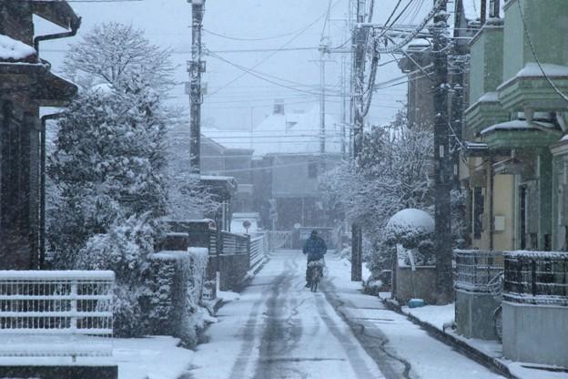 雪の降る道