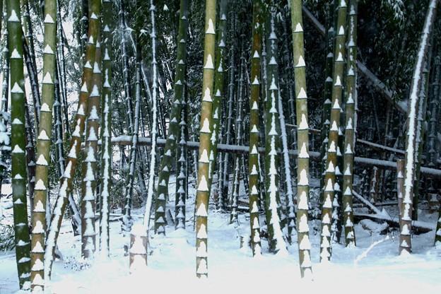 竹の幹への積雪