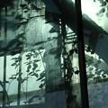 写真: greenhouse