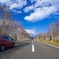 写真: 国道273号の白樺ストレート