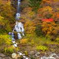 写真: 蛇王の滝 紅葉