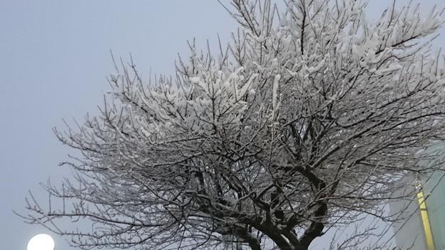 桜が咲いてるみたいに撮れた☆