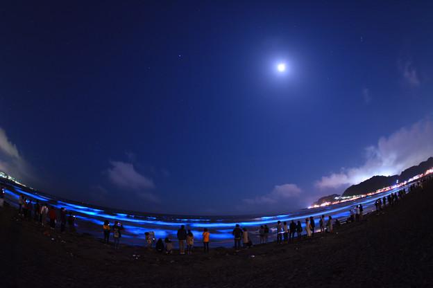 月夜の夜光虫