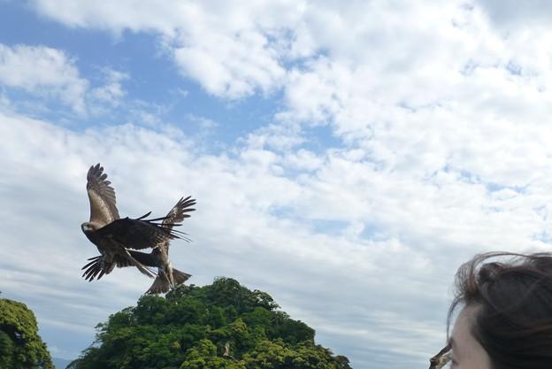 伊根の舟屋観光