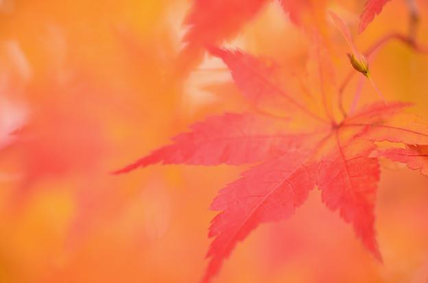 富士見高原の紅葉2