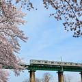 桜とJR八高線