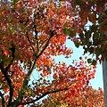 Photos: 秋の点描