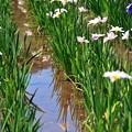 08 水にも写る花