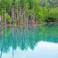 41 青い池