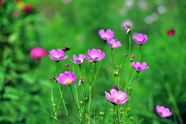 写真: 14 蜂も喜ぶ
